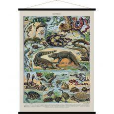 Reptiles, vintage poster art :: Baby Bottega