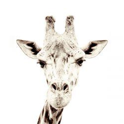 Carta da Parati Magnetica Giraffa