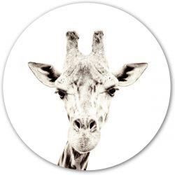 Giraffe Magnet Sticker