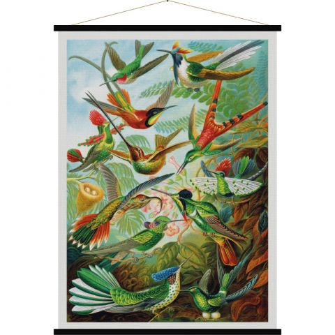 Humming Bird, vintage-style poster :: Baby Bottega