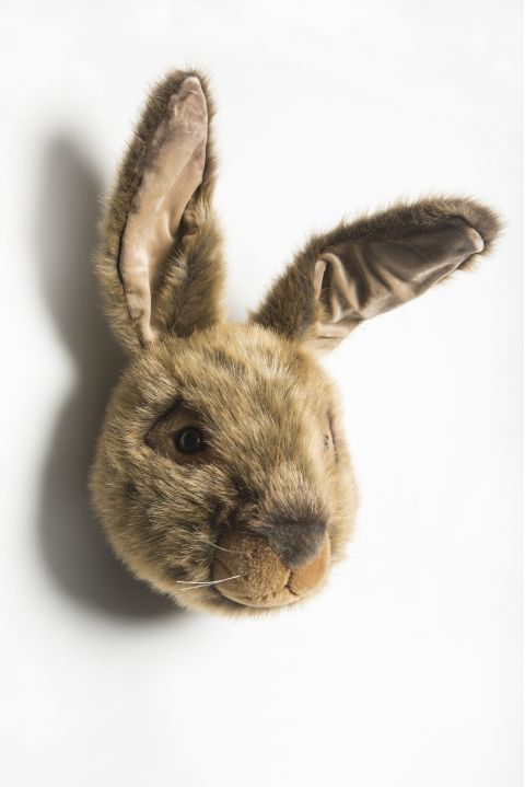 Lewis, the wild hare trophy head :: Wild & Soft